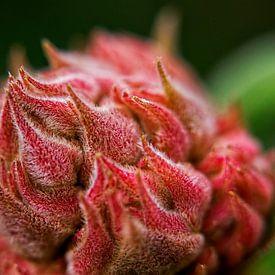 Hortensia / Hydrangea van 2BHAPPY4EVER.com photography & digital art