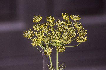 Wildblume gelb von Niek Traas