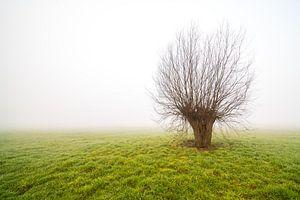 Nebliger Morgen mit nur stehendem Baum