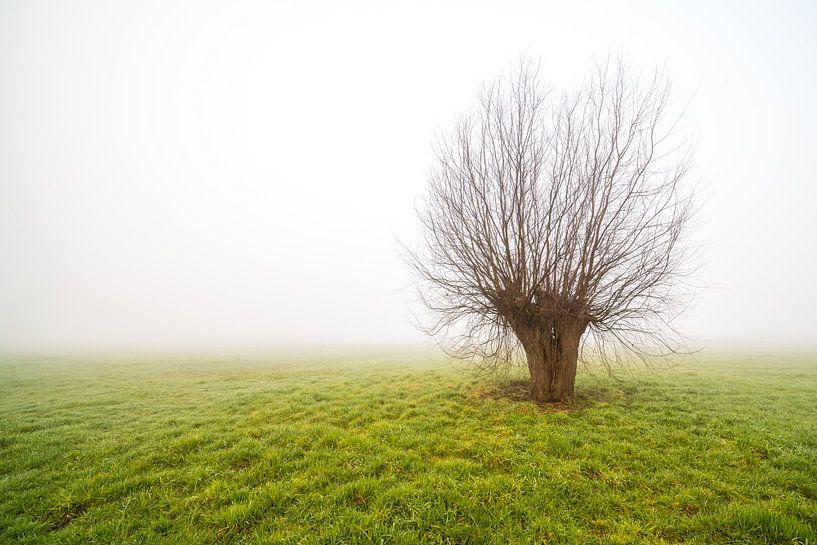 Nebliger Morgen mit nur stehendem Baum von Marcel Derweduwen