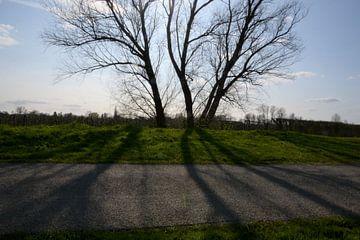 schaduw van de boom van A'da de Bruin