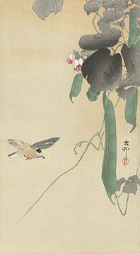 Vogel an blühender Bohnenpflanze von Ohara Koson