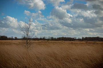 In the field van Johan Mooibroek
