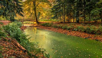 Herbst im Slochterbos von Henk Meijer Photography