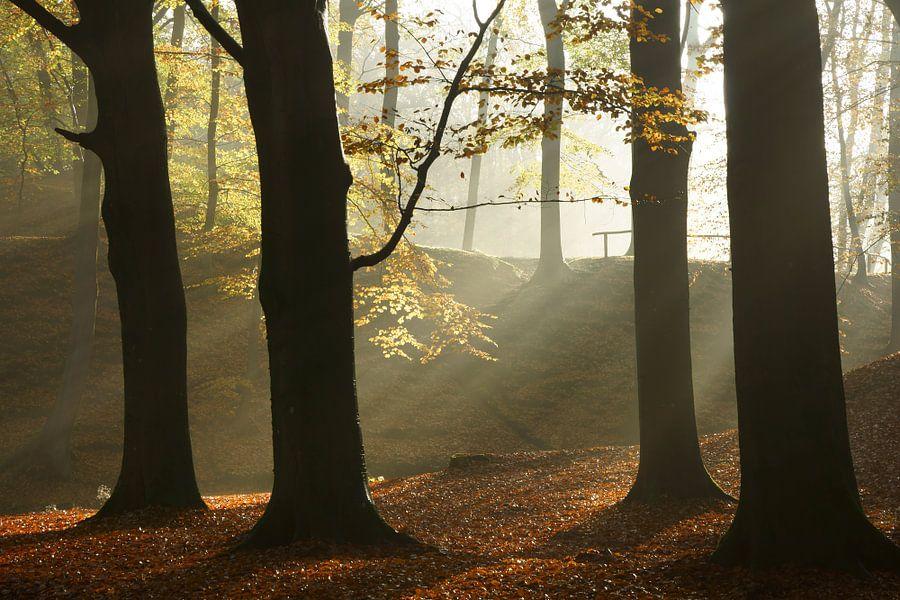 Beukenbos in de herfst van Michel van Kooten