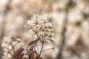ontluikende lente