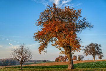 Oude fruitbomen in de herfst van Uwe Ulrich Grün
