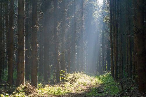 Bos en Licht