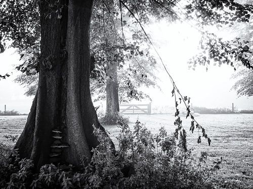 Hek verborgen in de mist achter bomen van