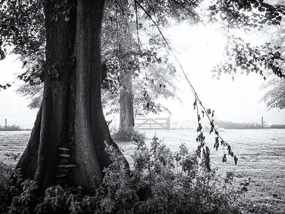 Hek verborgen in de mist achter bomen