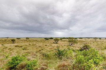 Savanne Zuid Afrika van Toby De Kort