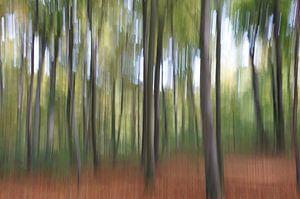 Gespensterwald von Axel Bückert