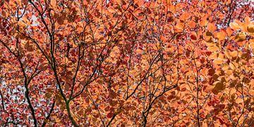 panorama boomkronen in het voorjaar