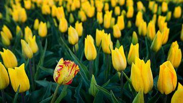 Ich bin froh, anders zu sein! von Marije Zuidweg
