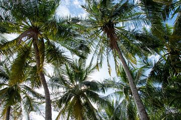 Sfeervolle foto van palmbomen in kleur van Bianca ter Riet