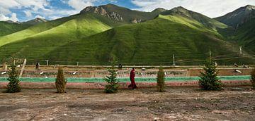 Het leven van Monniken op het Tibetaans Plateau van Yona Photo