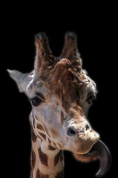 Portret van een giraf van Rolf Linnemeijer
