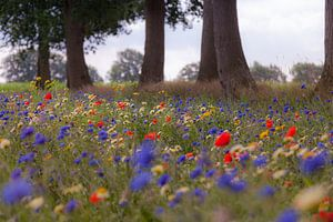 Kleurrijke veldbloemen in de berm onder de eikenbomen
