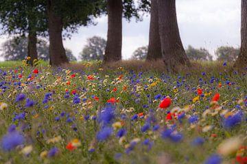 Kleurrijke veldbloemen in de berm onder de eikenbomen van Anneke Hooijer
