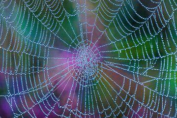 Colorweb  von Ilona Flokstra