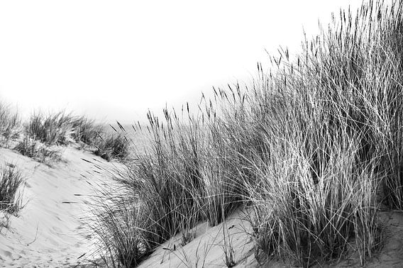 Duinen met helmgras en uitzicht op zee in zwart-wit