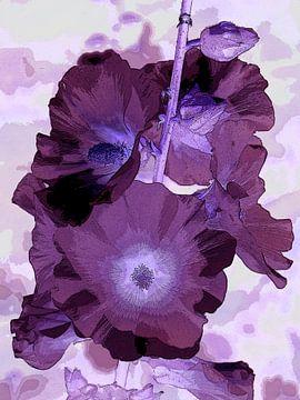 Violette Stockrose von Tim Lotterman Photography