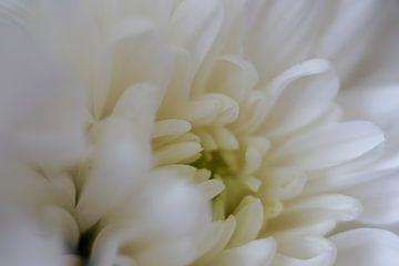 Witte sensatie van Lilisphotography