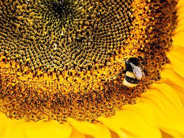 Bee - Hommel op zonnebloem van Stijn Cleynhens