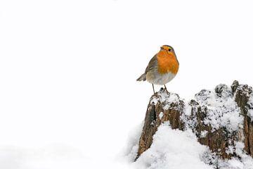 Rotkehlchen im Schnee auf einem Baumstamm. von Albert Beukhof