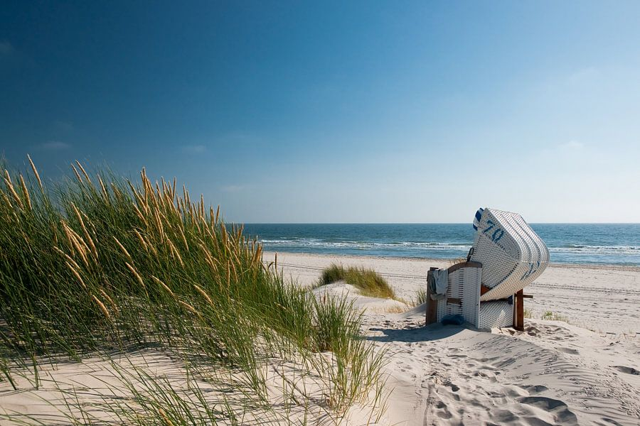 Noordzee - Duin met stralend Duingras