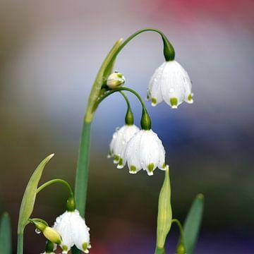 Frühlingsregen van Wiltrud Schwantz