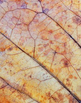 Herfstblad nerven van Lotte Veldt