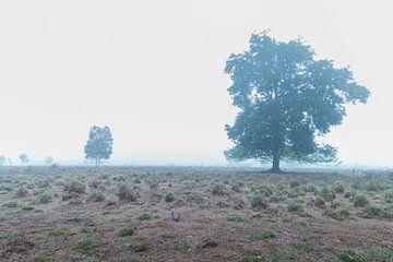 Bäume im Nebel von Johan Honders