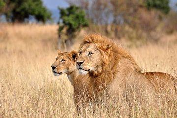 Twee metgezellen, leeuwen in de Maasai Mara van Catalina Morales Gonzalez