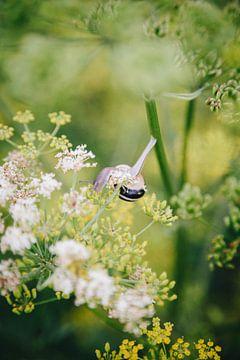 Slak op zoek naar voedsel in een veld vol wilde bloemen in Utrecht, Nederland van Evelien Lodewijks