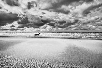 Pferde mit Sulky am Nordseestrand von eric van der eijk