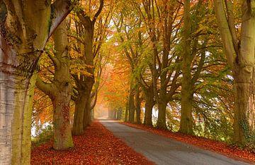 Autumn Lane  van Caroline Lichthart
