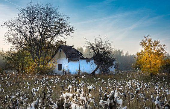 Vervallen huisje tussen de katoenplanten in de herfst, Hongarije van Rietje Bulthuis