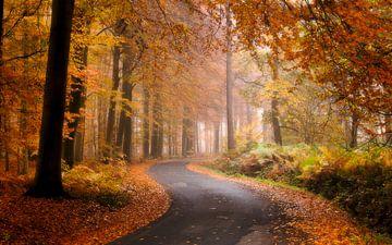 Belgie - Zonnebeke - Herfstplaatje in het heuvelland van Fotografie Krist / Top Foto Vlaanderen