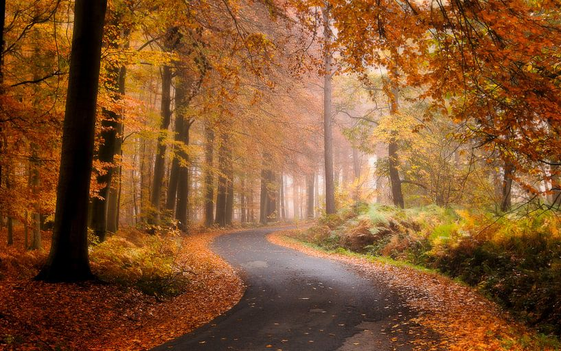 Belgie - Zonnebeke - Herfstplaatje in het heuvelland van Krist Hooghe