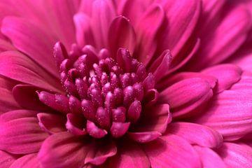 A flower von Christer Andersson