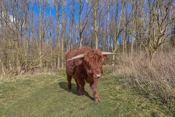 Highlander écossais sur Patricia van den Bos