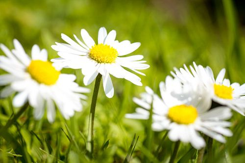 Spring is back!