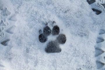 Snow trail van Kevin Overbeek