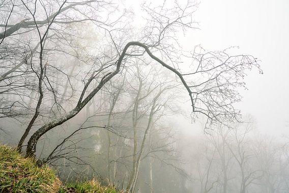 Nebel am Rosenstein