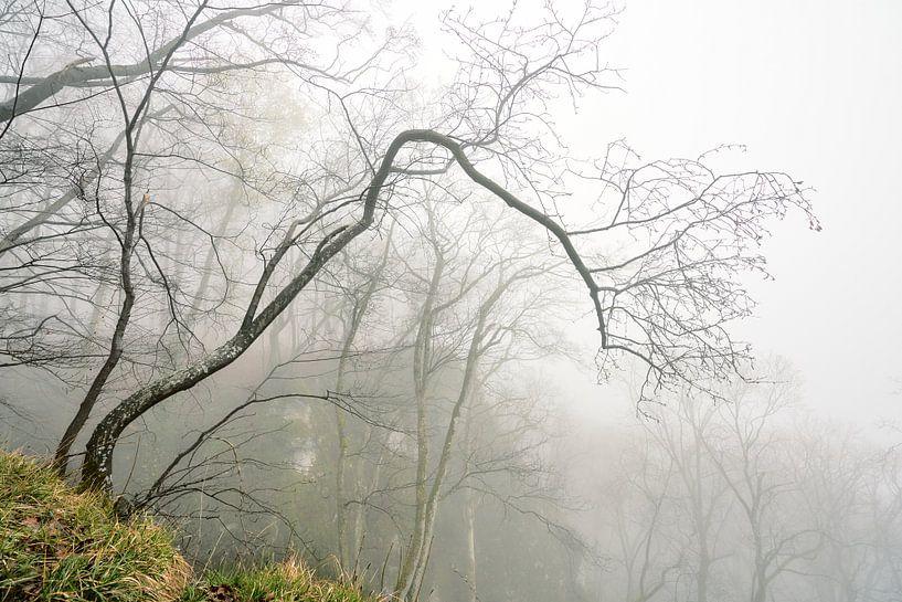 Nebel am Rosenstein von Max Schiefele