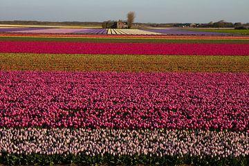 Kleurrijk tapijt van tulpenbollen  van Tiny Hoving-Brands