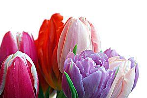 Een bos tulpen in natuurlijk licht van