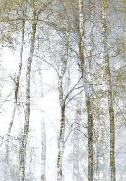 Berkenbomen sur Marian Steenbergen