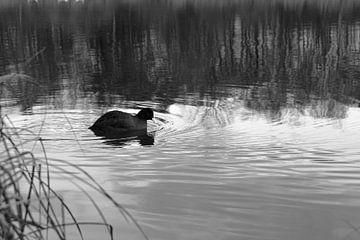 Ente im Wasser von Oguz Özdemir